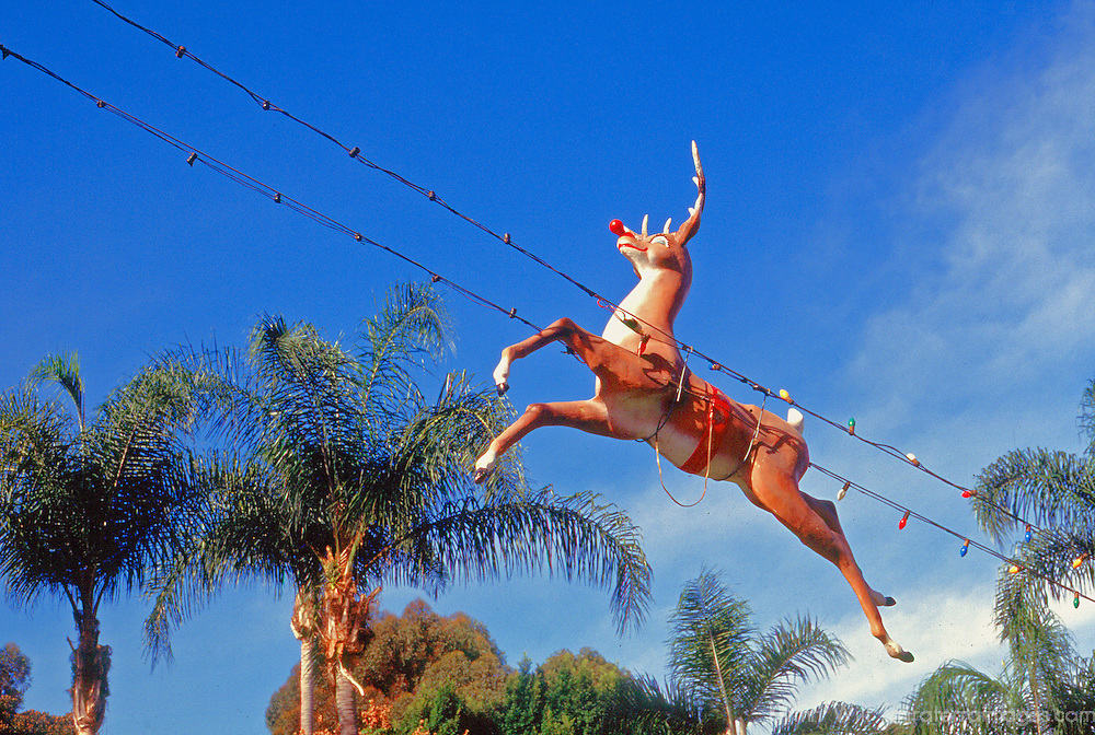 USA, California, San Diego. Christmas Reindeer flying over palm trees in San Diego.