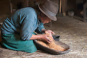 Wearing a traditional Andean felt hat, Ermelinda Ayme spends part of her morning in the windowless cooking hut, cleaning barley in the light from the doorway in the village of Tingo, central Andes, Ecuador. (From the book Hungry Planet: What the World Eats (p. 114). After she blows away the dust and chaff, the grain is ready to be ground for breakfast porridge.   Ermelinda Ayme is also one of the 80 people featured with one day's food in the book What I Eat: Around the World in 80 Diets. MODEL RELEASED.