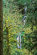 Cascade along Eagle Creek, Mount Hood National Forest, Columbia River Gorge National Scenic Area, Oregon USA