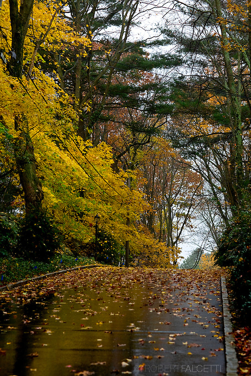 The tree lined driveway leading to a new 22,185 square foot stone Georgian style mansion in the Round Hill neighborhood of Greenwich, CT Saturday Nov. 8, 2008. The home is located on 4.8 acres and features 8 bedrooms, 10.3 bathrooms, and a 2 bedroom cottage. The home was built and designed by the noted Bill gardiner/Judith larson team and is valued at $ 25,000,000.