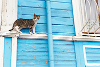 Turquie, chat a Istanbul // Turkey, Istanbul cat