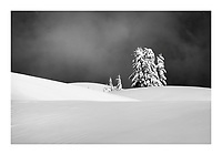 Snow covered trees on a ridge in the Mount Baker Wilderness Wshington USA