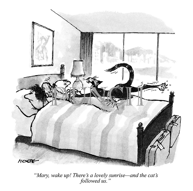 """""""Mary, wake up! There's a lovely sunrise — and the cat's followed us."""""""