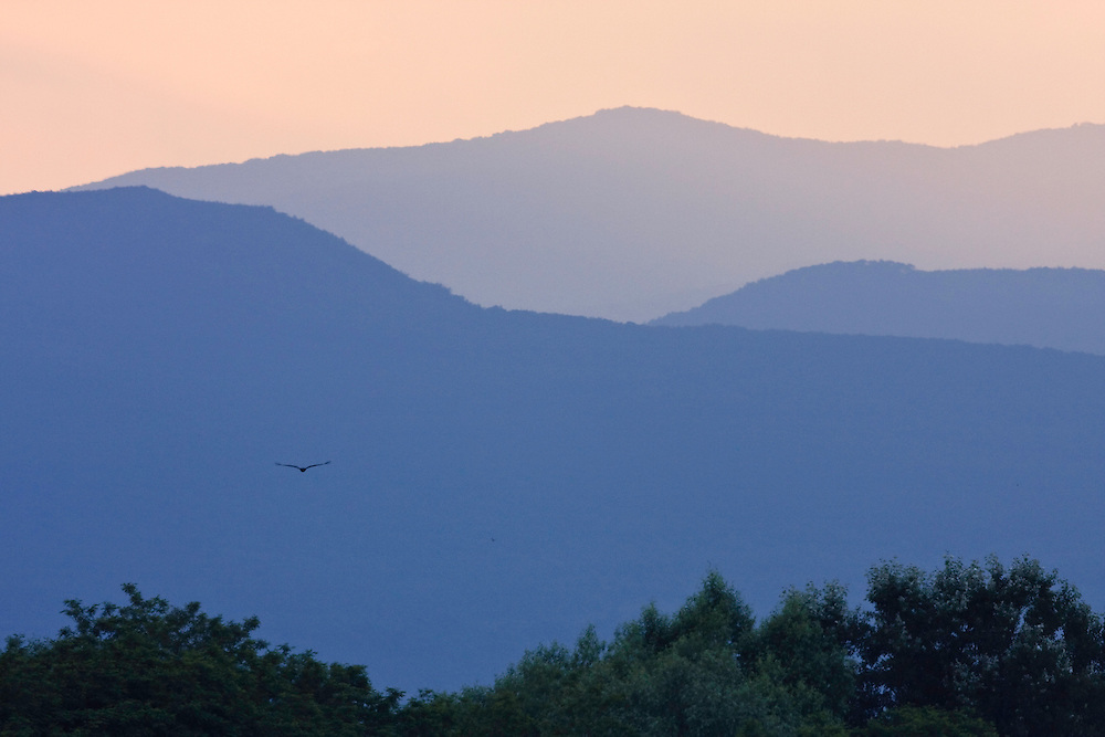 Kaiseradler fliegt zu den Bergen östlich von Kosice, Slanske vrchy, Ost-Slowakei / Imperial Eagle flying to the mountains east of Kosice, Slanske vrchy, Eastern Slovakia