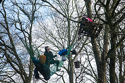 Harefield, UK. 20 January, 2020. Activists climb trees at the Colne Valley wildlife protection camp. Extinction Rebellion, Stop HS2 and Save the Colne Valley had reoccupied the camp two days before as part of an ongoing attempt to protect ancient woodland threatened by the HS2 high-speed rail link after a small group of Stop HS2 activists had been evicted by bailiffs over the course of the previous two weeks. 108 ancient woodlands are set to be destroyed by the high-speed rail link.