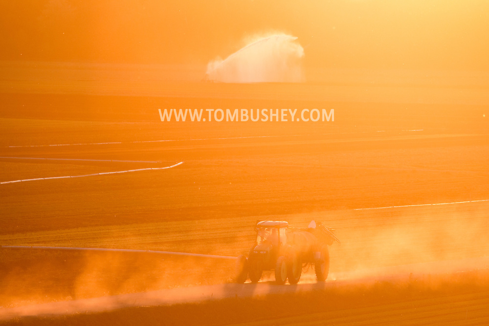 Dust billows up from the road as a tractor crosses Black Dirt fields at sunset  in Goshen, New York. Irrigation water is sparying on the fields in the background. The spring has been very dry so far in Orange County.
