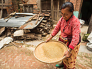 04 AUGUST 2015 - KHOKANA, NEPAL: A woman shucks rice in a street clogged with earthquake debris in Khokana, a village about an hour from Kathmandu. Three months after the earthquake, roads in many rural villages are still blocked by earthquake debris. The Nepal Earthquake on April 25, 2015, (also known as the Gorkha earthquake) killed more than 9,000 people and injured more than 23,000. It had a magnitude of 7.8. The epicenter was east of the district of Lamjung, and its hypocenter was at a depth of approximately 15 km (9.3 mi). It was the worst natural disaster to strike Nepal since the 1934 Nepal–Bihar earthquake. The earthquake triggered an avalanche on Mount Everest, killing at least 19. The earthquake also set off an avalanche in the Langtang valley, where 250 people were reported missing. Hundreds of thousands of people were made homeless with entire villages flattened across many districts of the country. Centuries-old buildings were destroyed at UNESCO World Heritage sites in the Kathmandu Valley, including some at the Kathmandu Durbar Square, the Patan Durbar Squar, the Bhaktapur Durbar Square, the Changu Narayan Temple and the Swayambhunath Stupa. Geophysicists and other experts had warned for decades that Nepal was vulnerable to a deadly earthquake, particularly because of its geology, urbanization, and architecture.     PHOTO BY JACK KURTZ