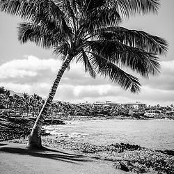 Maui Hawaii palm tree black and white photo with Wailea Beach and the Pacific Ocean. Copyright ⓒ 2019 Paul Velgos with All Rights Reserved.