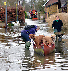 A resident on Ham Island, on the River Thames at Old Windsor heads for her home after talking her dogs for a walk, United Kingdom, Saturday, 8th February 2014. Picture by David Dyson / i-Images