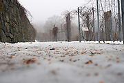 Ice Path (Natural), The Boston Arboretum, Massachusetts, 2013 Trees and park frozen, Boston, MA