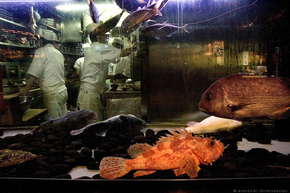 View of a restaurant in Shinjuku, Tokyo, via the aquarium on their shop-window.