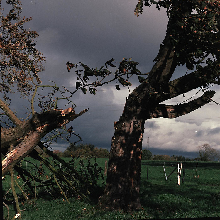 A tree hacked in half by the storm