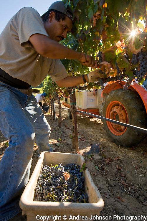 Somerston Vineyards, Napa, California