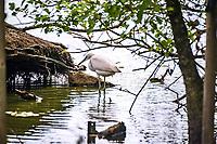 Considere comme l'un des plus importants parcs ornithologiques en Europe, le Parc des Oiseaux presente une collection d'oiseaux exceptionnelle de plus de 3000 individus, representant pres de 300 especes originaires de tous les continents.