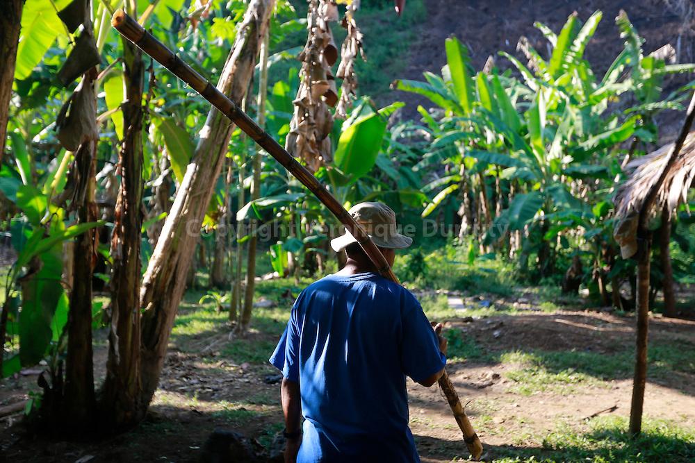 Sugar cane, Guaymi native reserve, Osa Peninsula, Costa Rica // Canne a sucre, Reserve indigene Guaymi, Peninsule de Osa, Costa Rica
