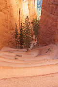 Switchbacks on the Navajo Loop Trail in Bryce Canyon National Park, Utah.