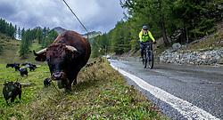 13-09-2017 SUI: BvdGF Tour du Mont Blanc day 5, Champex<br /> Deze etappe wordt volledig in Zwitserland verreden en bevat enkele mooie trails. We eindigen bergop waar er in Champex werd overnacht. Jaap