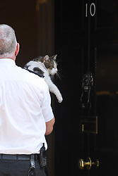 © Licensed to London News Pictures. 24/05/2019. London, UK. Security carry Larry the Downing Street cat in to 10  Downing Street in Westminster, London, before the Prime Minster makes a statement. The British Prime Minister was under huge pressure to quit over her handing of negotiations for the UK's exit from the European Union. Photo credit: Ben Cawthra/LNP