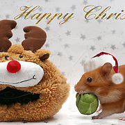 Christmas Santa Hamster with Brussels Sprout