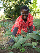 Akia Joyce is a member of Aliast A Jerusalem group, part of Send a Cow, Uganda. . Here she is mulching her cabbages. The skills she has learnt have transformed her life. Her husband was inspired by her efforts and is now also receiving training too. Together they grow enough food to feed their family a balanced diet, with enough surplus to sell at market. There recent orange tree grafting is turning in to a profitble business.