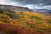 Grand Mesa - Fall Colors