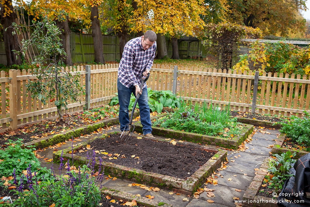 Digging over an empty bed in a vegetable garden in autumn