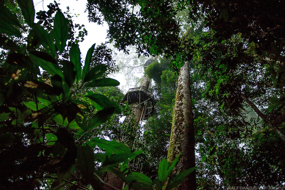 Canopy plattform in the lowland rain forest of the Danum Valley Conservation Area (DVCA, Borneo - Malaysia)