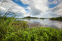 Freshwater marsh at the Savannah National Wildlife Refuge.
