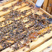 Treating honeybee hives boxes against Varoa mites, a contributing factor in Colony Collapse Disorder.