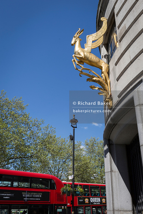 The gilded winged springbok outside the eastern side of Africa House, the embassy of the Republic of South Africa, on 1st May, in Trafalgar Square, London, England. This is the South African High Commission, formerly the embassy of the Union of South Africa, built between 1931-1933 to designs by Sir Herbert Baker FRIBA and Alexander Thomson Scott.
