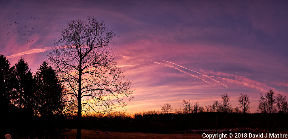 Dawn Morning Clouds, Contrails, and Birds. Winter Backyard Nature in New Jersey. Composite of 7 images taken with a Fuji X-T1 camera and 16 mm f/1.4 lens (ISO 200, 16 mm, f/5.6, 1/30 sec). Raw images processed with Capture One Pro and the composite generated with AutoPano Giga Pro.