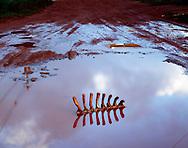 """O JardimEm dezembro de 2008, passei a residir na região periférica de Belo Horizonte. Transito entre os bairros Vale do Sol e Jardim Canadá, a 20 km do centro da cidade, tentando estabelecer com estes bairros uma relação de pertencimento. identifico ali, pulsante, uma enorme diversidade cultural, produto de um crescimento visível a olhos nus. Passo a percorrer cada canto destes bairros, munido do equipamento fotográfico de formato grande (com chapas 4x5 de  polegadas), para realizar fotografias através das quais procuro entender a expansão da cidade para fora de seus limites, o embate de seus habitantes com a natureza, e as razões que levam pessoas tão diferentes a procurar os mesmos pedaços de periferia. O caos gerado pelo crescimento vertiginoso que estas regiões - bem como qualquer periferia de qualquer grande cidade - enfrentam, lembram-me uma grande maquete do mundo, uma miniatura gigantesca da ocupação humana no planeta, a materialização do poderoso conto de Jorge Luís Borges, """"Do Rigor da Ciência"""": ...Naquele Império, a arte da cartografia atingiu uma tal perfeição que o mapa duma só província ocupava toda uma cidade, e o mapa do império, toda uma província. (...)(...) menos apegadas ao estudo da cartografia, as gerações seguintes entenderam que esse extenso mapa era inútil e não sem impiedade o entregaram às inclemências do sol e dos invernos. Nos desertos do oeste subsistem despedaçadas ruínas do mapa, habitadas por animais e por mendigos. (...)Segundo Alejandro Castellote, em seu texto Terra Vermelha, A Viagem de um Cartógrafo Dissidente:Pedro David esquiva-se das representações já estereotipadas e empreende uma viagem, minúscula em suas dimensões geográficas, na qual se transparece sua própria experiência e se reconhecem, entre outros, os ecos da literatura, da pintura, da escultura e do land art.A proposta visual que Pedro David faz a partir de seu entorno mais próximo não se limita a denúncias peremptórias"""