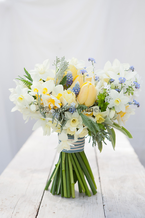 Spring flower bunch with white and cream  scented Narcissi, soft yellow Tulips, Muscari and forget-me-not, tied with blue striped ribbon