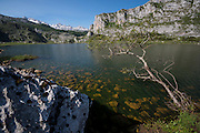 Ercina lake surrounded by mountains, (Picos de Europa National Park), Cantabria, Northern Spain, Spain