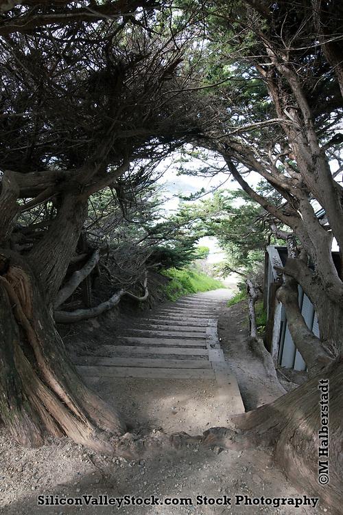 Carmel-by-the-Sea
