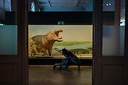 AFrica Museum Tervuren. vrouw bekijkt diorama met nijlpaard.