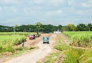 Sugar cane harvest, Cuba near Camaguey.