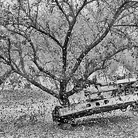 A harvester shakes few almonds off of a tree on an almond farm in Turlock in Stanislaus County in California's Central Valley, CA, Monday, Oct. 3, 2016. One of the worst droughts in California history officially ended this spring in all of the state's counties except Fresno, Kings, Tulare and Tuolumne.  <br />