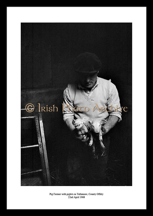 Pig Farmer with piglets in Tullamore, County Offaly<br /> 22nd April 1968