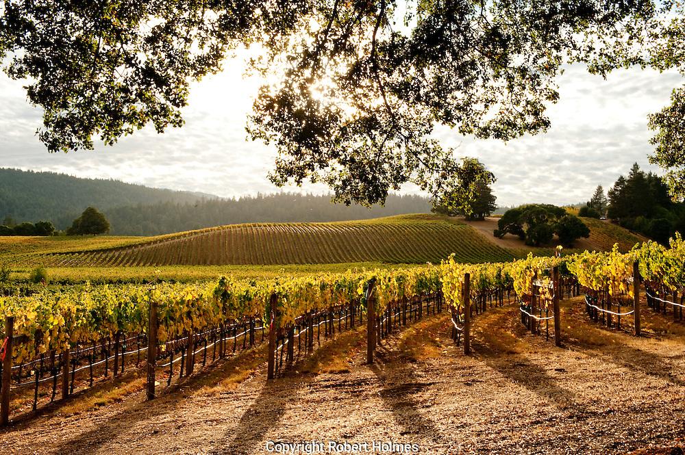 Goldeneye vineyards, Anderson VAlley, California