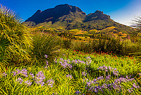 Delaire Graff Wine Estate atop Helshoogte Pass, near Stellenbosch, Cape Winelands (near Cape Town), South Africa.