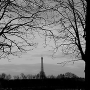 Black and White of Eiffel Tower through tree branches