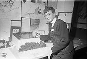 Young Scientists Exhibition.1969..01/01/1969.1st January 1969..The Aer Lingus Young Scientist Exhibition 1969 at the RDS..Picture shows Frank Keohane, a pupil from St Patricks Comprehensive School, Shannon Airport with his exhibit 'a study of wildlife in the Shannon estuary' which won 2nd place of the Junior Section of Biology.  .