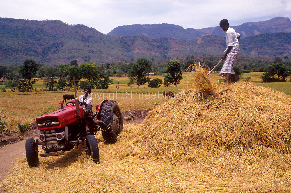 Sri Lanka. Threshing paddy (rice) with a tractor.