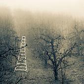 Landscapes_FA