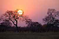 Dramatic sunset on the African savanna, Zimbabwe, Africa. Fine art photography prints. Nature photography wall art.