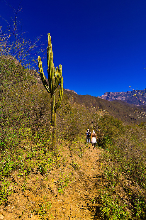 Tourists hiking in the Urique Canyon, the deepest canyon in the Sierra Tarahumara at 6,200 feet, is one of six distinct canyons that make up the Copper Canyon (Barranca del Cobre), Chihuahua, Mexico