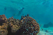 Snorkeling, Huahine,French Polynesia, South Pacific