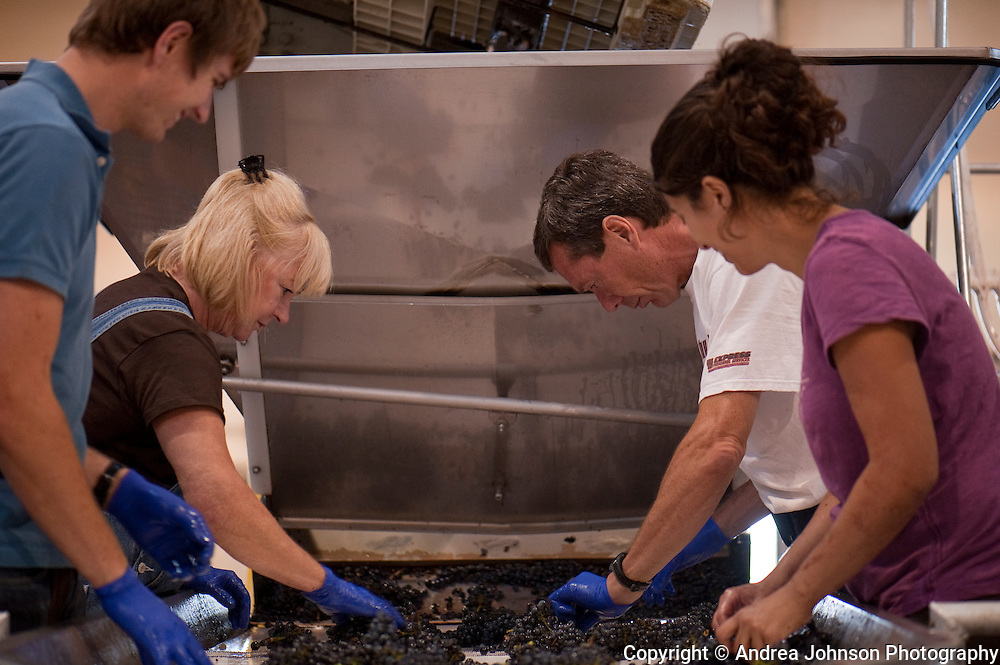 Bill and Cathy Stoller sort pinot noir grapes, Stoller Vineyards, Dundee HIlls, Willamette Valley, Oregon