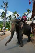 Elephant show.